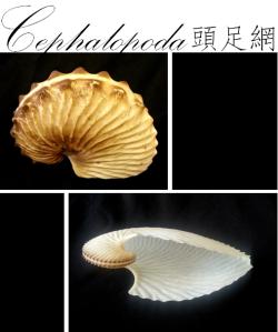 ClassIntro-Cephalopoda