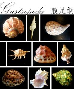 ClassIntro-Gastropoda
