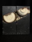 齒輪角度 (1)文石對章 | JCR Collections