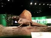 恐龍廳-長棘龍 (Spinosaurus)