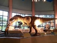 恐龍廳 - 暴龍 (Tyrannosaurus)