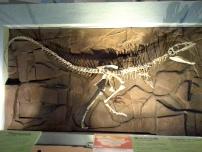 恐龍廳 - 獸腳亞目 (Theropod)