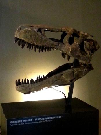 恐龍廳-特暴龍頭骨原件標本