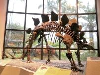 恐龍廳 - 劍龍 (Stegosaurus)