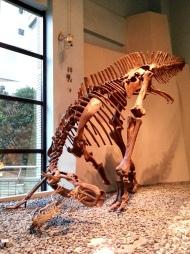 恐龍廳-迅掠龍 (Dromaeosauridae)