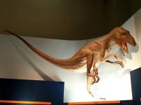 恐龍廳-恐爪龍 (Deinonychus)