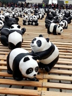 1600貓熊世界之旅—臺北