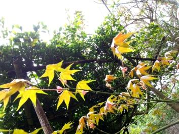 秘密花園-苗栗〈舉目山莊〉