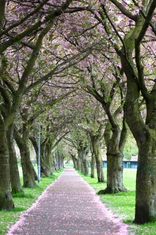 愛丁堡之旅 – The Meadows