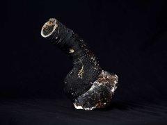 黑蛇螺 (Serpulorbis colubrinus Roding)