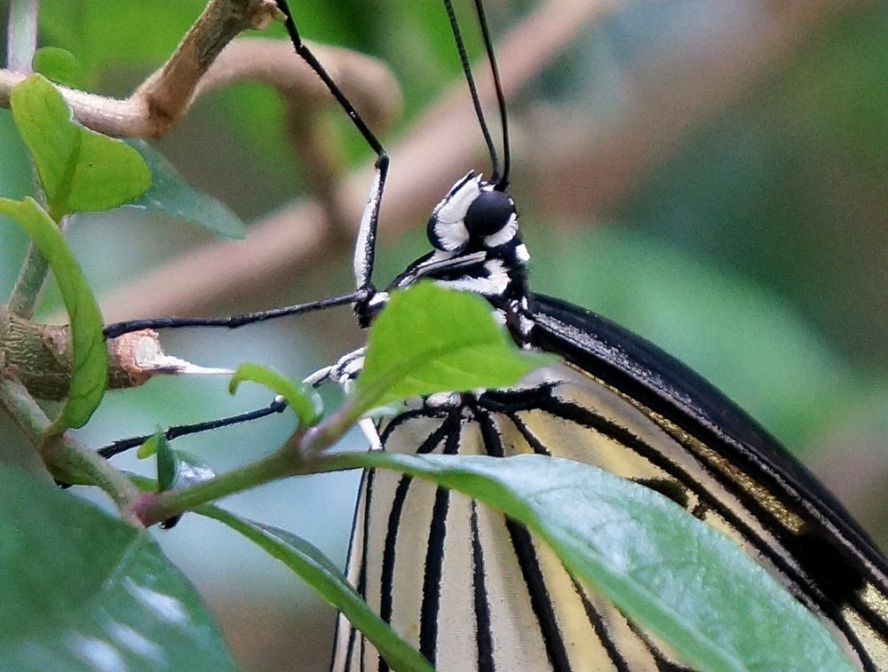 愛丁堡之旅-Edinburgh Butterfly & Insect World (4)
