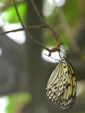 愛丁堡之旅-Edinburgh Butterfly & Insect World (3a)