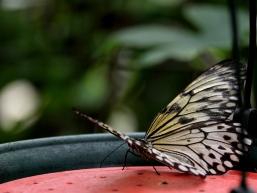 愛丁堡之旅-Edinburgh Butterfly & Insect World (3a)