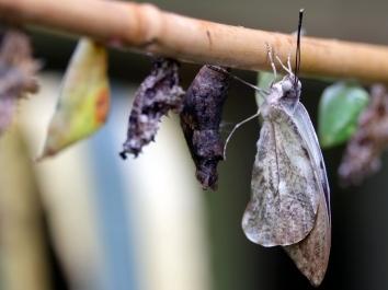 愛丁堡之旅-Edinburgh Butterfly & Insect World (3b)