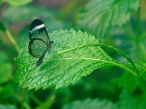 愛丁堡之旅-Edinburgh Butterfly & Insect World (3)
