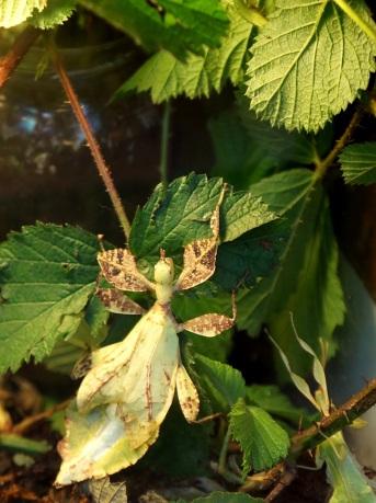 愛丁堡之旅-Edinburgh Butterfly & Insect World (3)