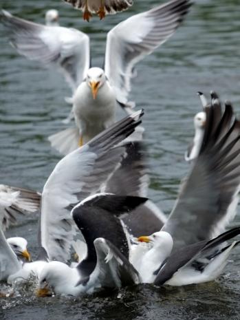 Edinburgh_Holyrood_4-9(Swan Lake)
