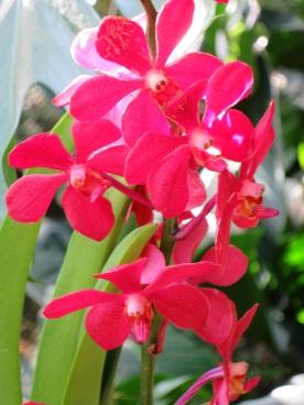 Aranda Super Red