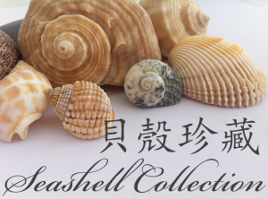 Seashells-collection_button2