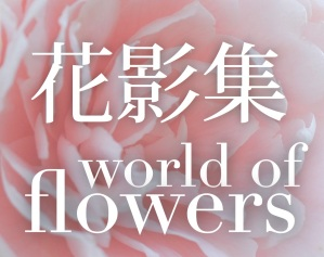 World of Flowers-Banner